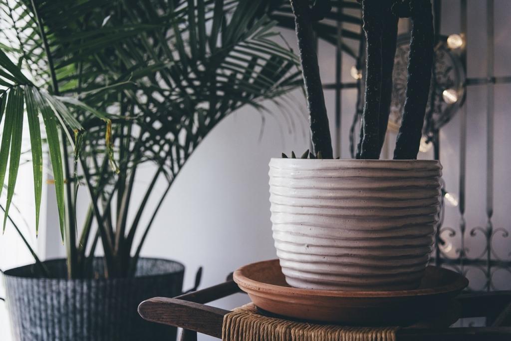 BERGPALME sorgt für saubere Luft in der Wohnung