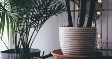Zimmerpflanzen Luftreinigung